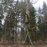 przemkowski park krajobrazowy-3